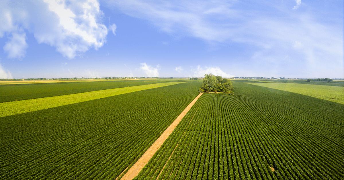 Produção de soja do Brasil em 2019 deve igualar recorde de 2018, diz Abiove