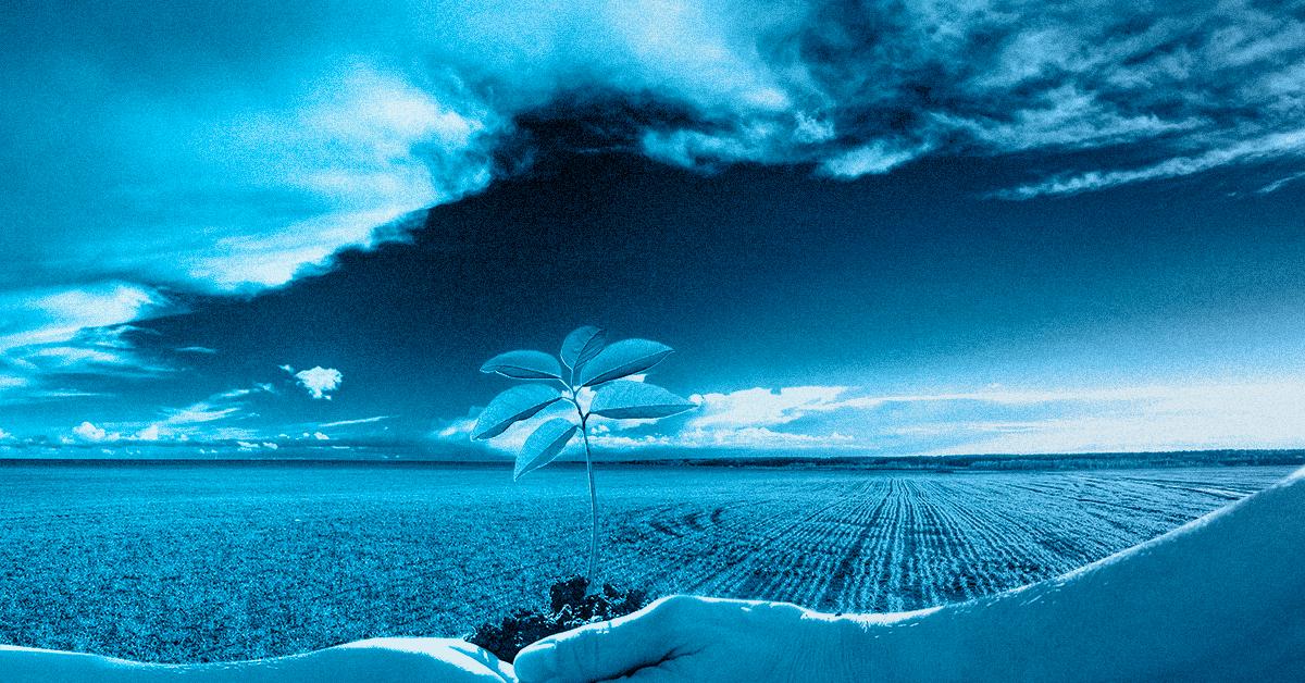 Pesquisadores estudam fertilizante que não cause impacto ambiental